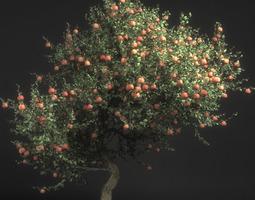 3d model pirus malus apple tree
