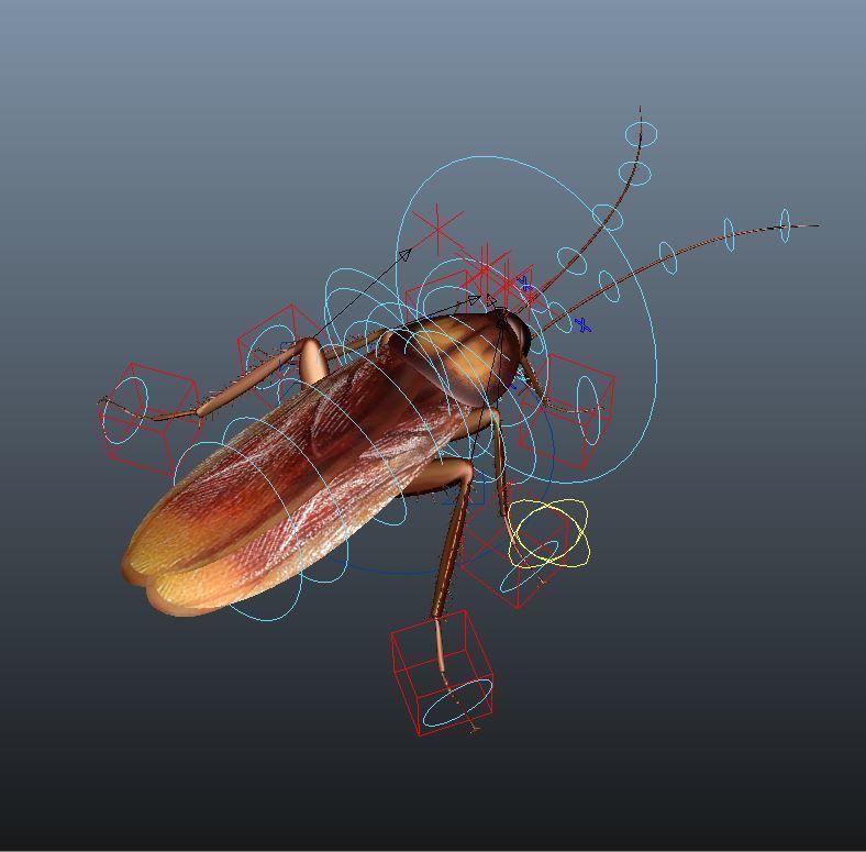 cockroach 3d maya rigged