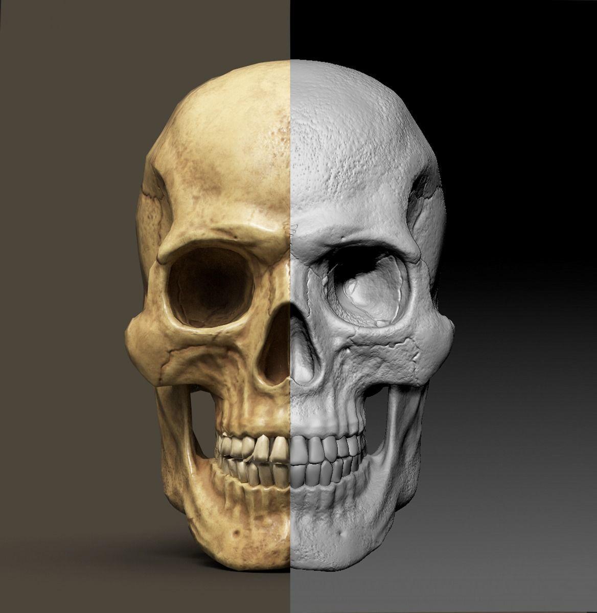 Skull Low Polly PBR