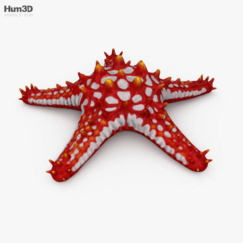 Red-Knobbed Starfish HD