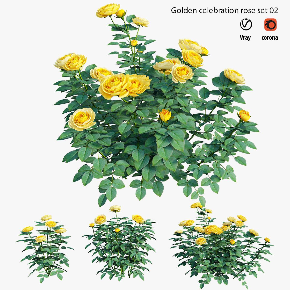 Golden celebration rose  set 02