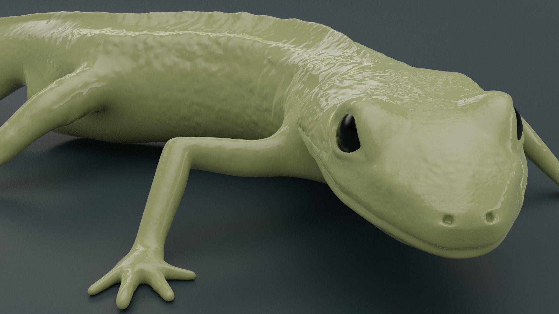 Lissotriton Montandoni Carpathian newt for 3D printing sculpt