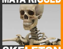 Human Skeleton Maya Rigged 3D Model