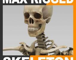Human Skeleton 3ds Max Rigged 3D Model