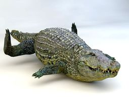 Crocodile aligator 3D model