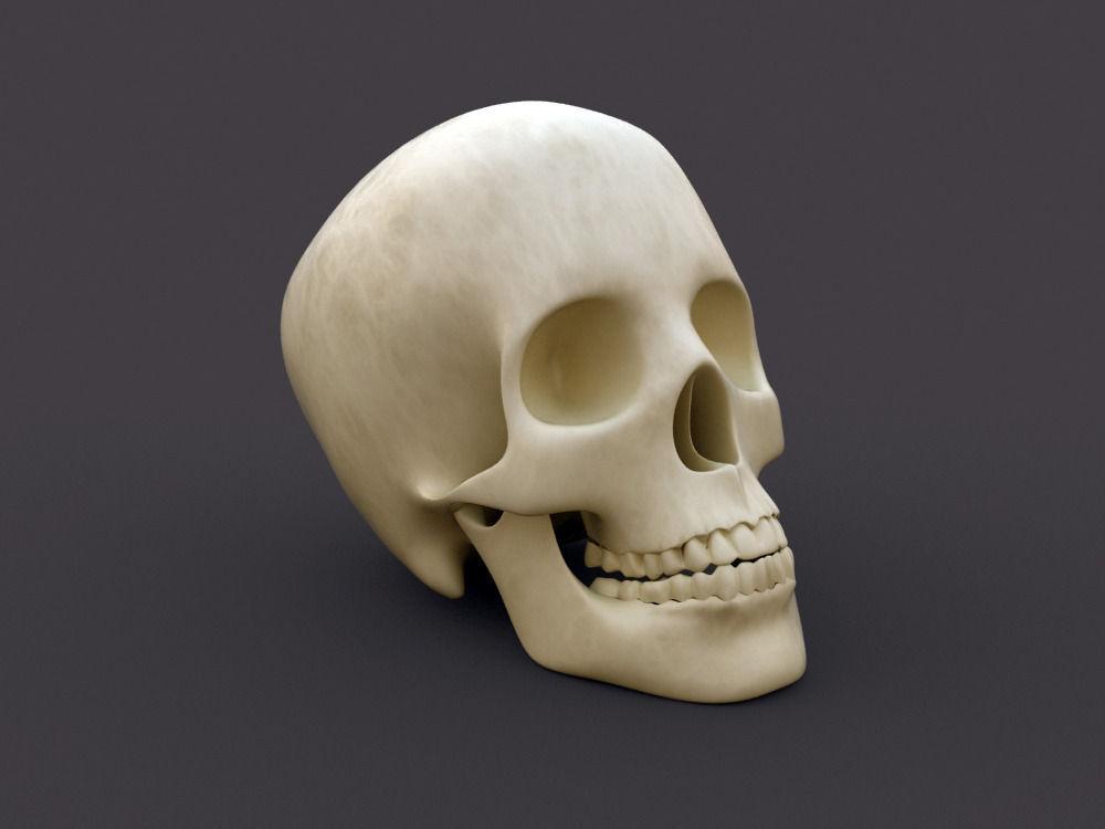 Head Human Skull 3d Model Cgtrader