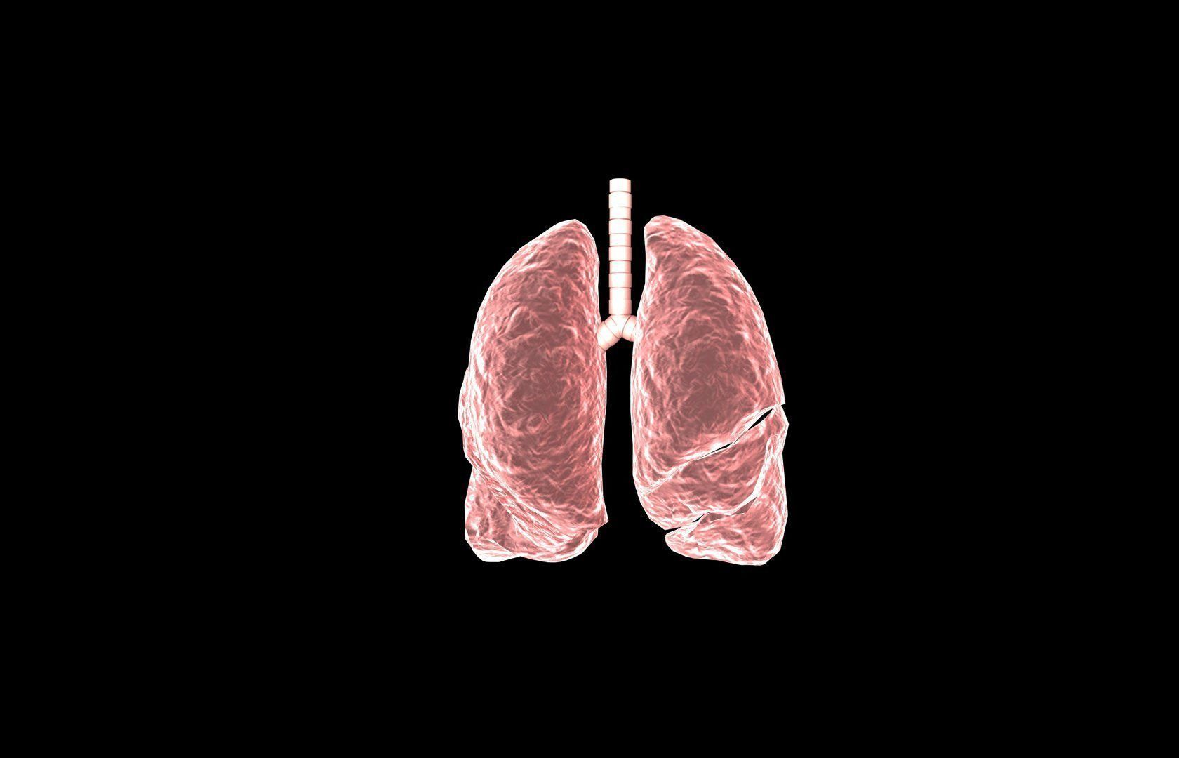 Lung 3d Model with lobes Medically accurate