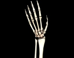 Bones of the Hand Medically Accurate 3d Model 3D Model