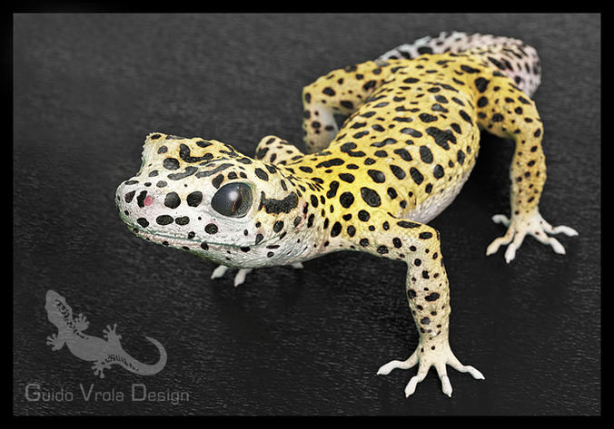 Leopard Gecko3D model