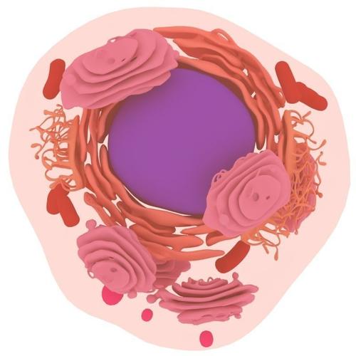 animal cell 3d model max obj fbx mtl 1