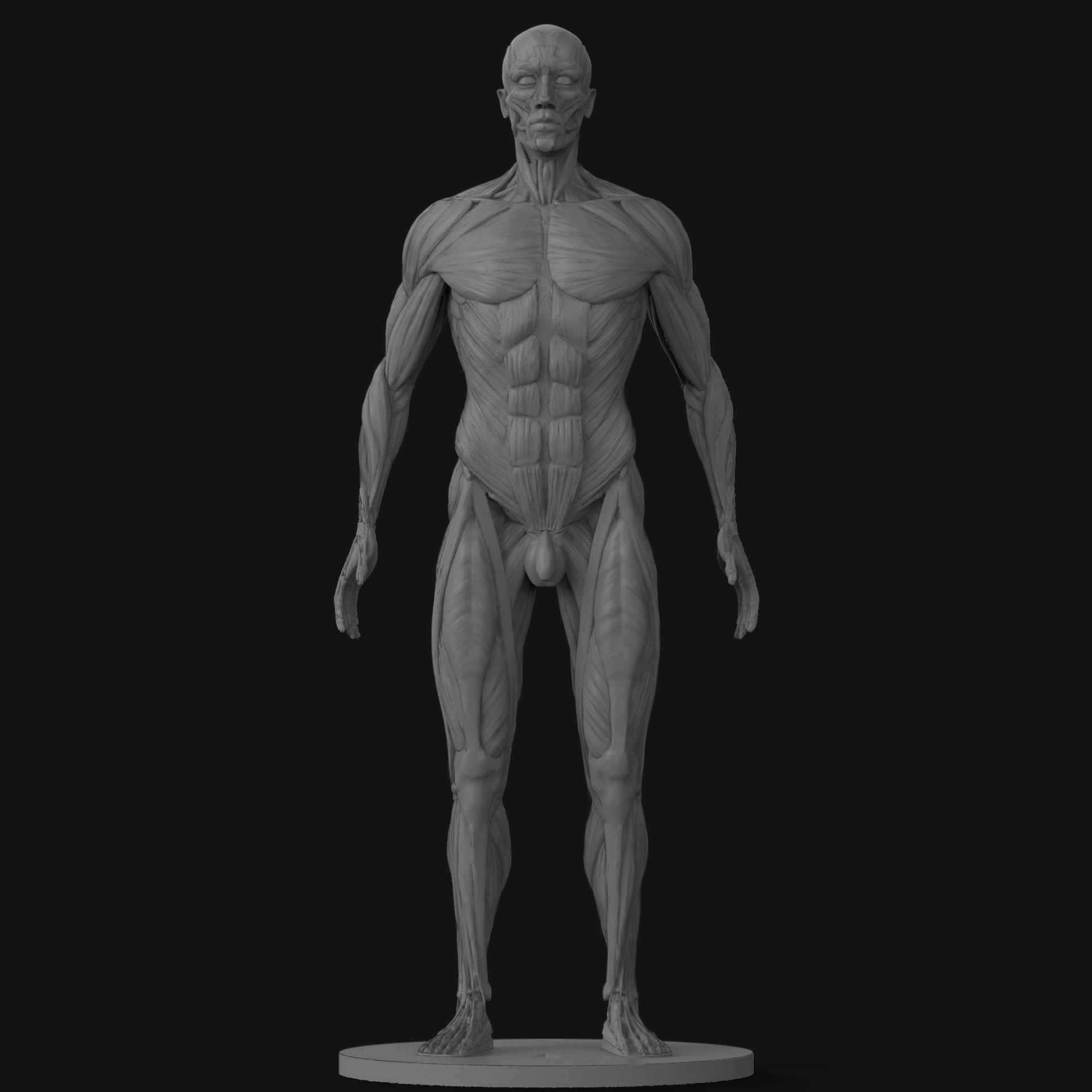 3D printable model Male Ecorche Human Anatomy Reference