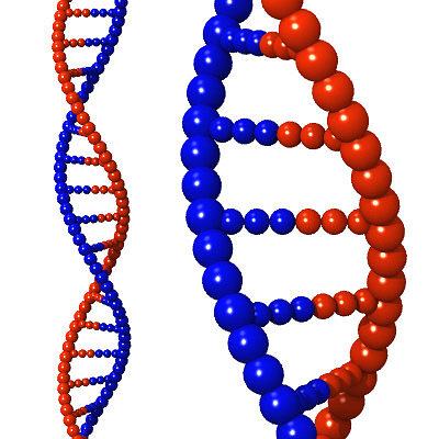dna strand 3d model 3ds lwo lw lws 1