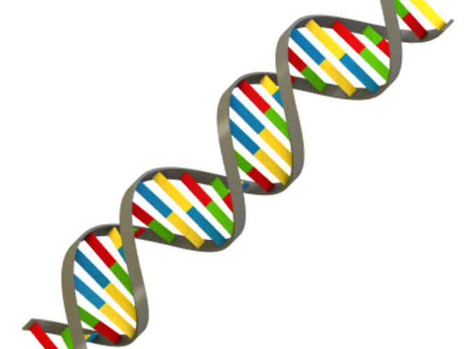 dna strand 3d model 3ds lwo lw lws cgtrader com Bow with New Car Clip Art Family Car Clip Art