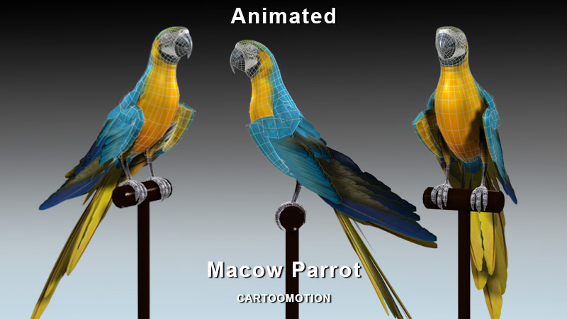 blue macaw parrot 3d model cgtrader