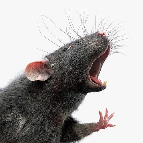 Rat Fur Rigged Black