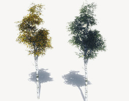 free birch trees sample model 3d asset game-ready