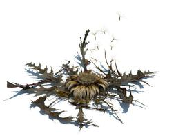 Dead Flower And Leaves 3D