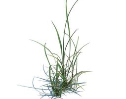 3D Two Clumps Of Grass