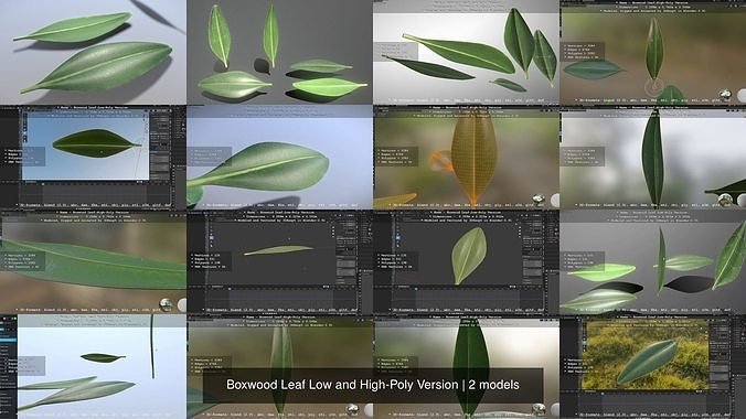 Boxwood Leaf Low and High-Poly Version