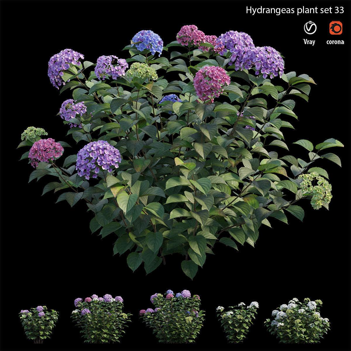 Hydrangea Plant set 33