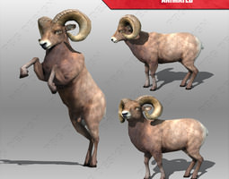 Ram Animated 3D Model