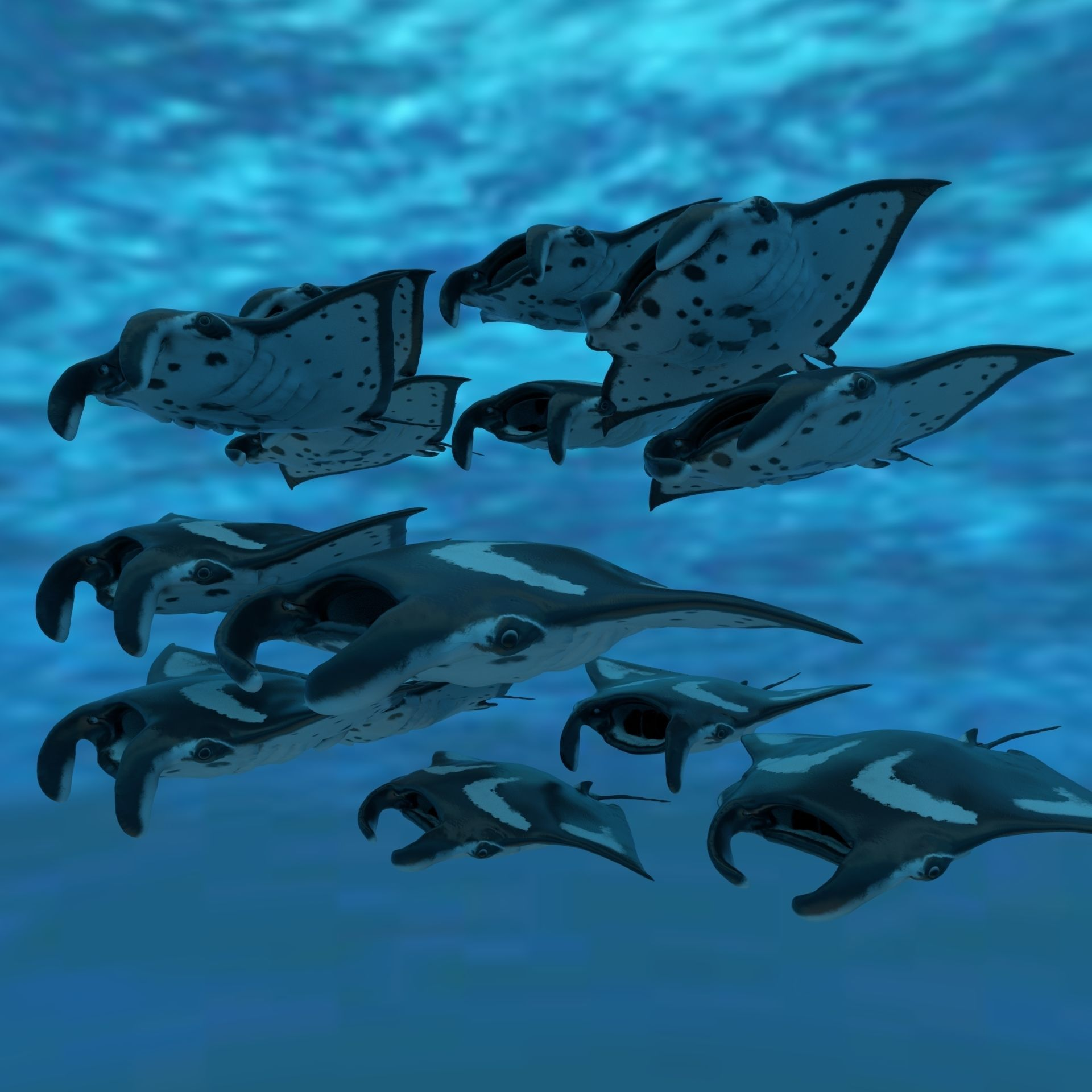 Manta Stingray 6 Animations Unity and UE4