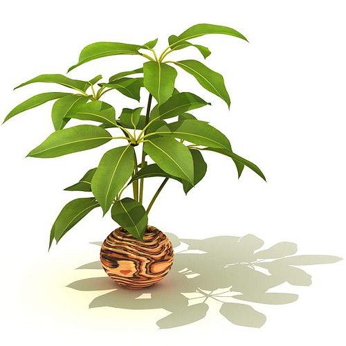 potted decorative plant 3d model  1