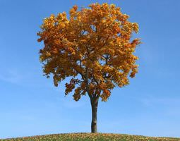 3D Gold Leafy Elm Tree