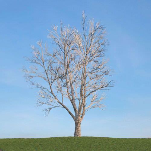 Leafless Tree3D model