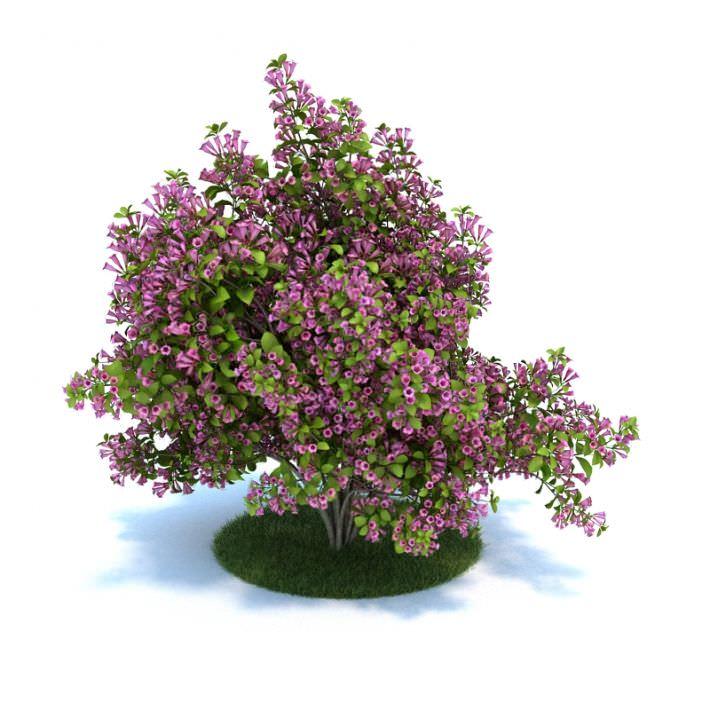 Purple Flower Bush 3d Model Cgtrader Com