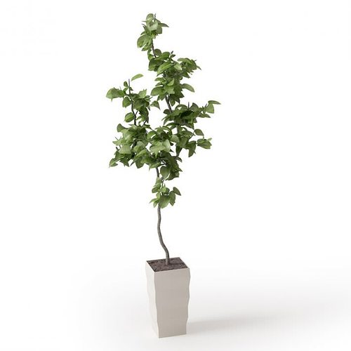 small potted tree 3d model obj mtl 1