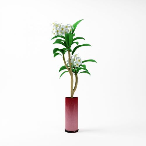 Flowering Plant In A Vase3D model