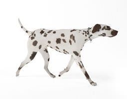 3D model Black Spotted Dog