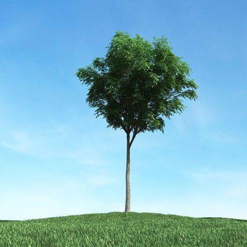thin leafy green tree 3d model obj mtl 1