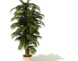 Plant Tropical Potted 3D model