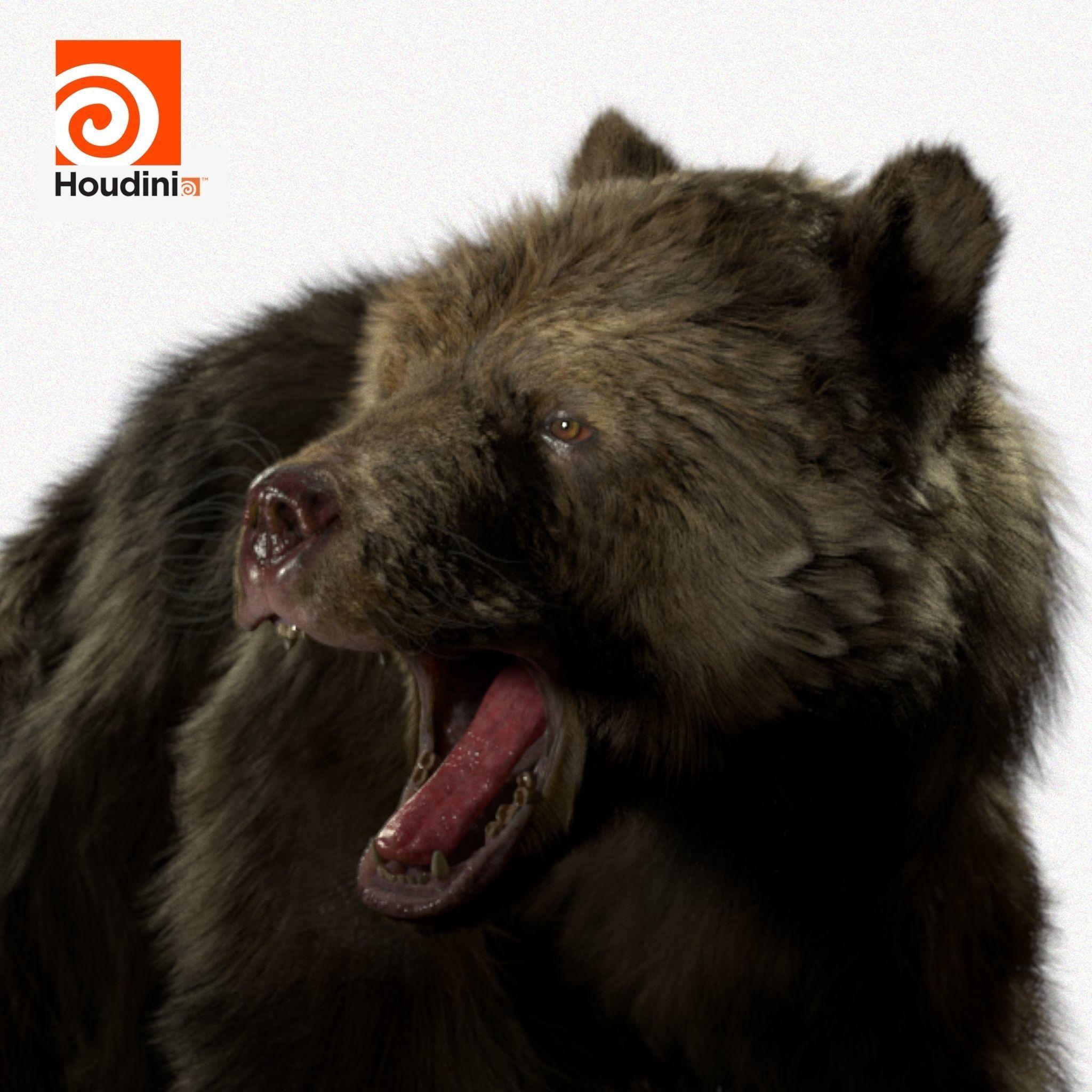 brown bear RIGGED