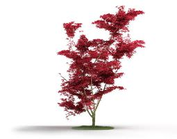 3d model red leafed tree