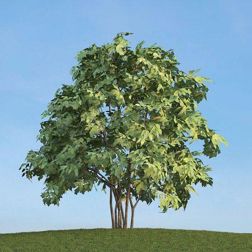 leafy green tree 3d model obj 1