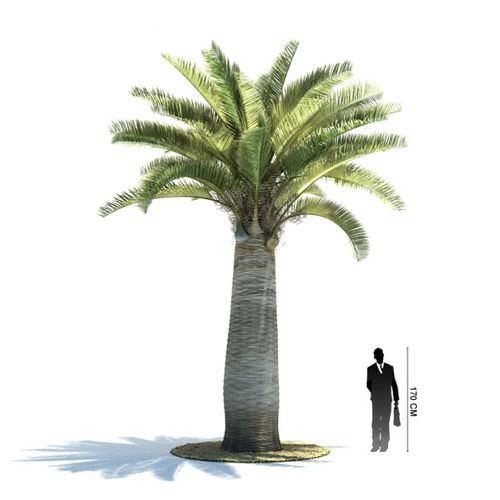 Palm Tree3D model
