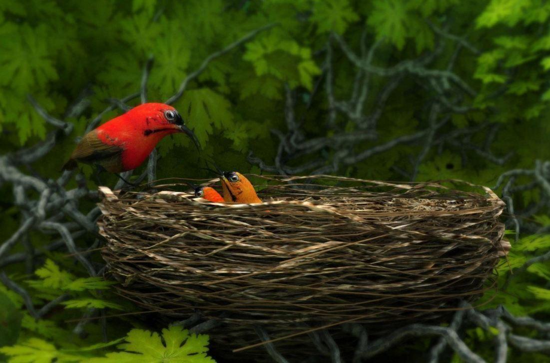 birds weth nest 3D Model MAX OBJ 3DS FBX   CGTrader.com Bird Nest With Bird