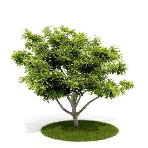 Green Leaf Tree3D model