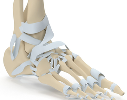 Foot Skeleton 3D model