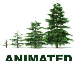 3d animated fir tree - animation of growth