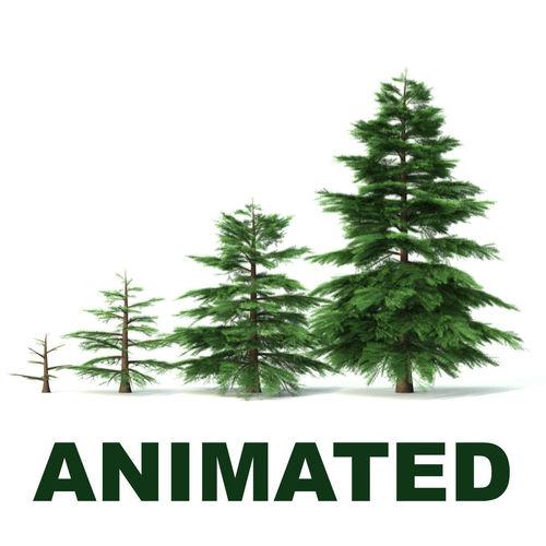 fir tree - animation of growth 3d model animated max obj mtl fbx c4d lwo lw lws 1