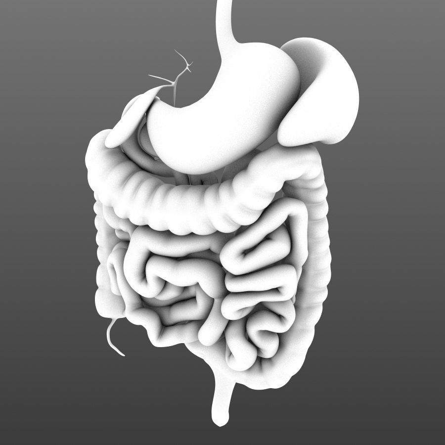 Digestive system animated 3d asset cgtrader digestive system animated 3d model low poly rigged animated max obj fbx c4d lwo lw ccuart Choice Image