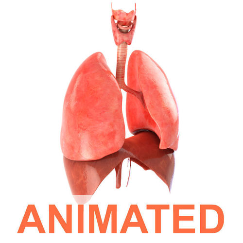 lungs animated 3d model animated max obj mtl fbx c4d lwo lw lws 1