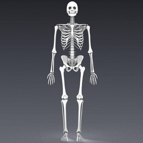 3d asset human skeleton rigged | cgtrader, Skeleton