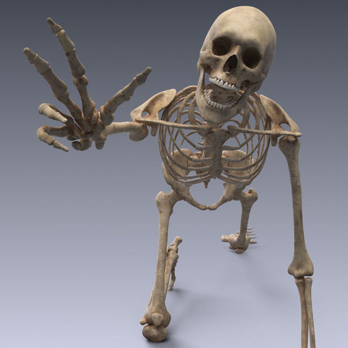 human skeleton rigged 3d model low-poly rigged animated max obj 3ds fbx c4d lwo lw lws 1