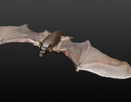 vampire bat  3d model obj