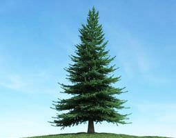 Large Green Pine Tree 3D